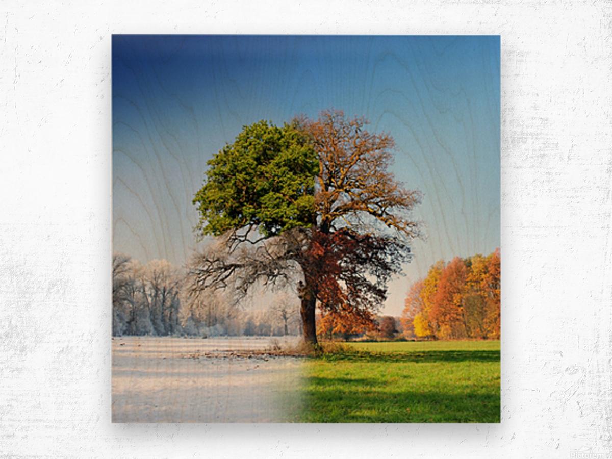 4 seasons Wood print