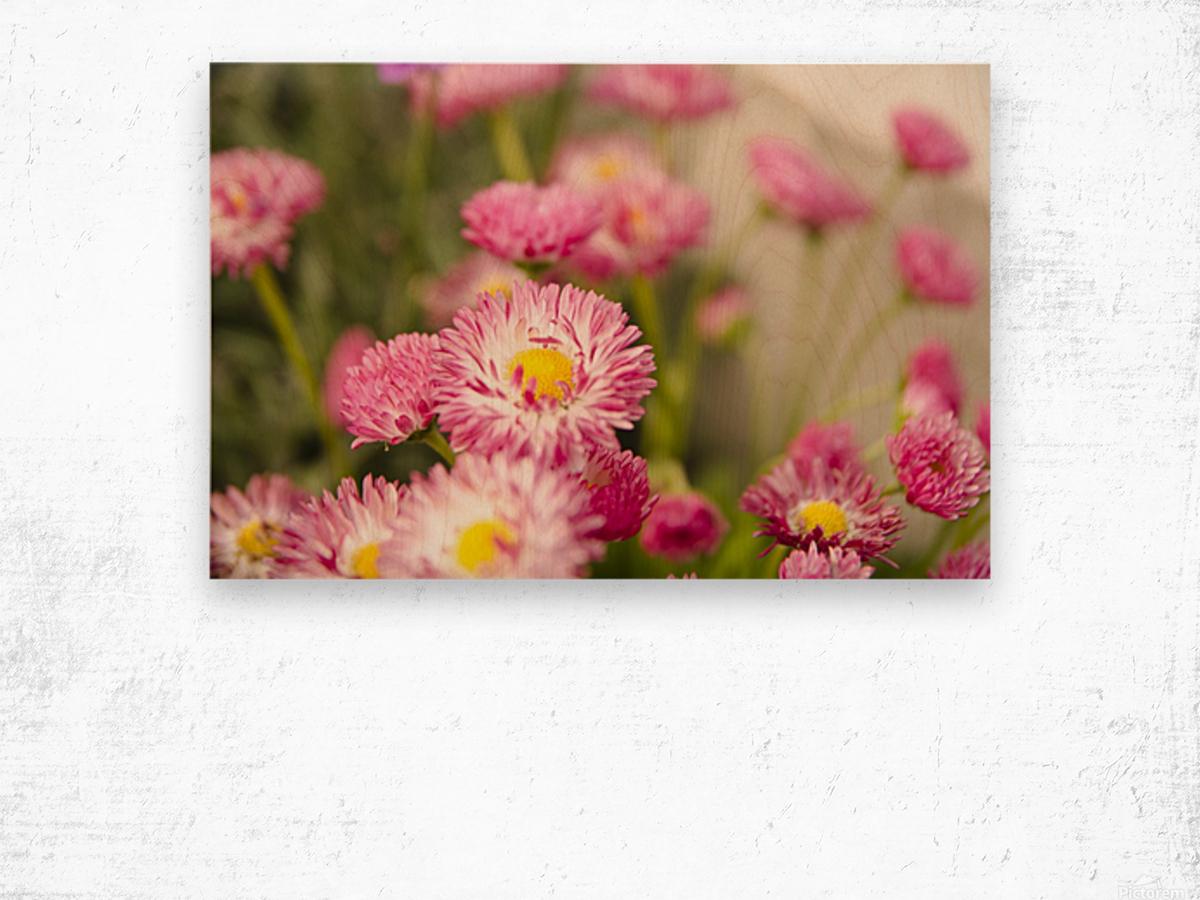Blooms in the Garden Wood print