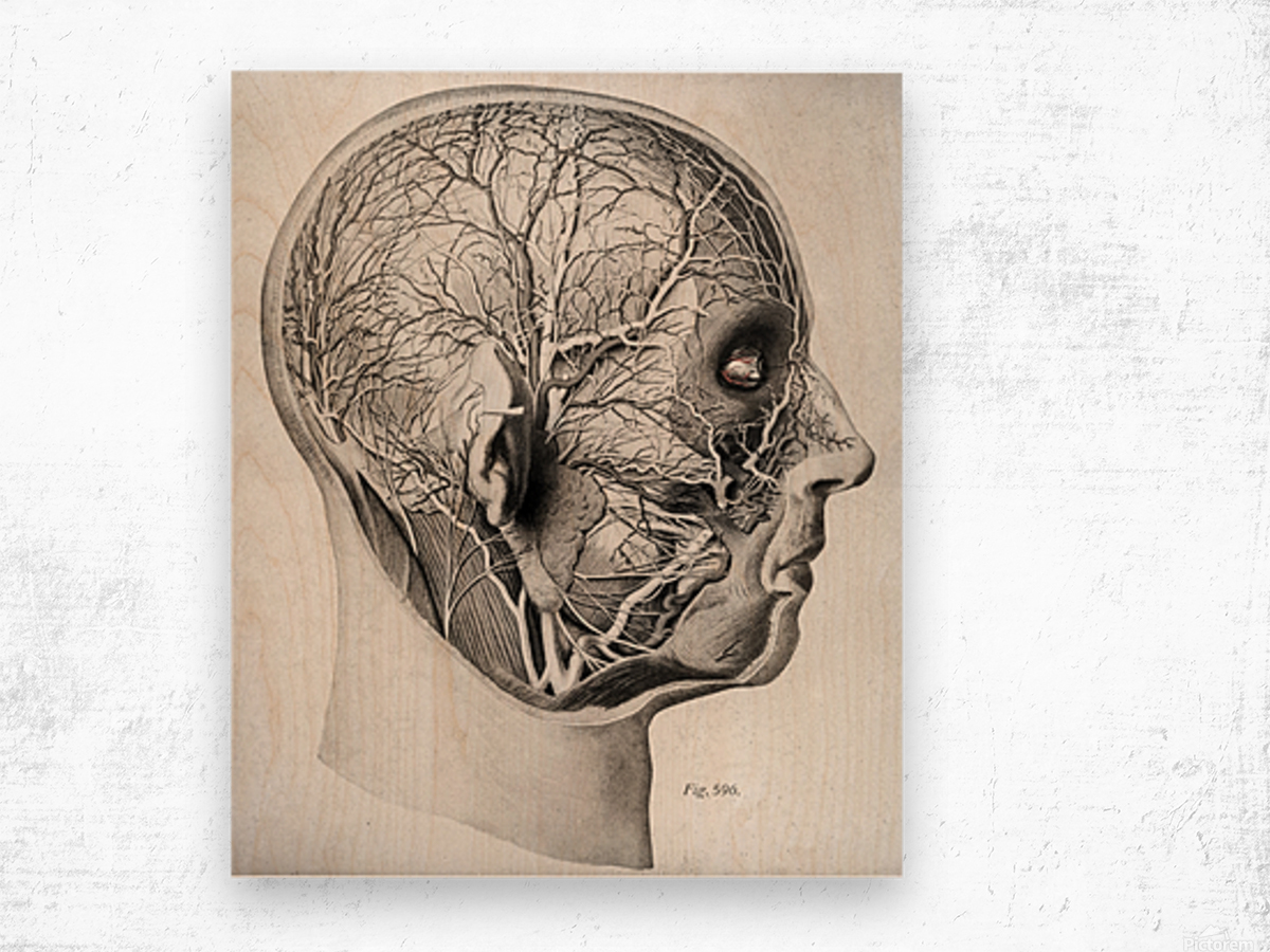 Nerves and Blood Vessels of the Head Wood print