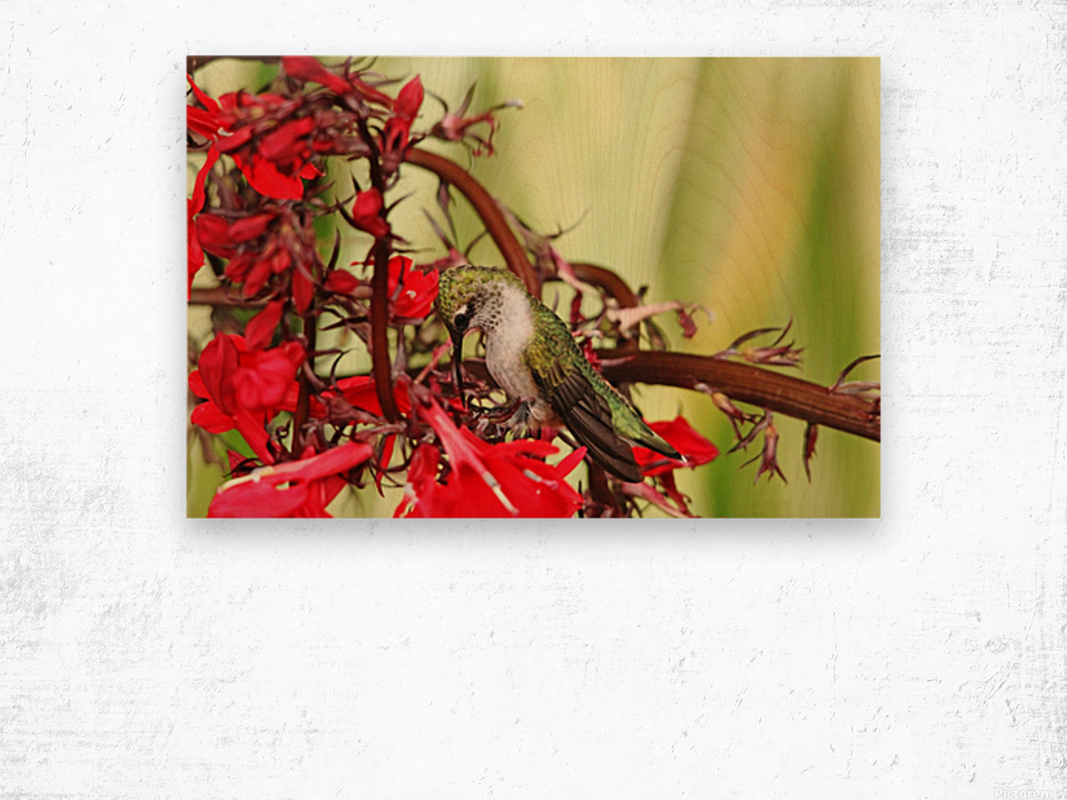 Hummingbird Giving Thanks Wood print