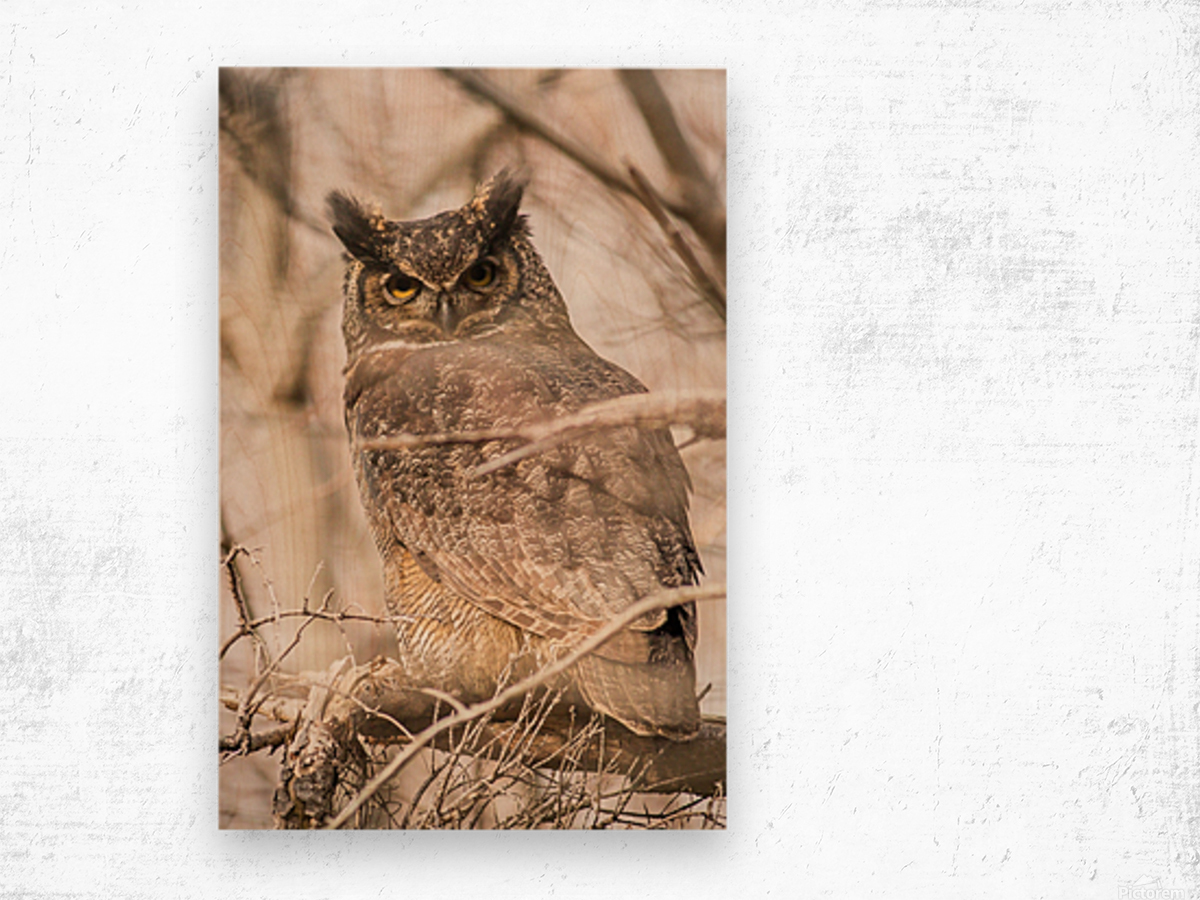 Great horned Wood print