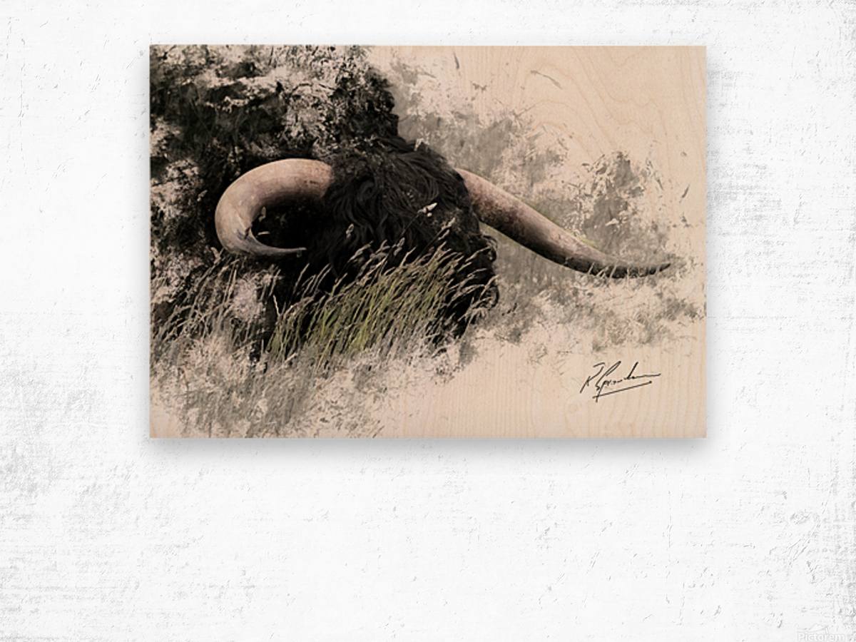 Bull in long grass Wood print