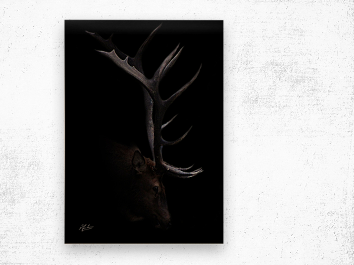 Elk in Black Wood print
