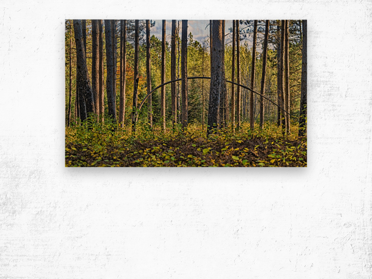 Stand of Trees Wood print