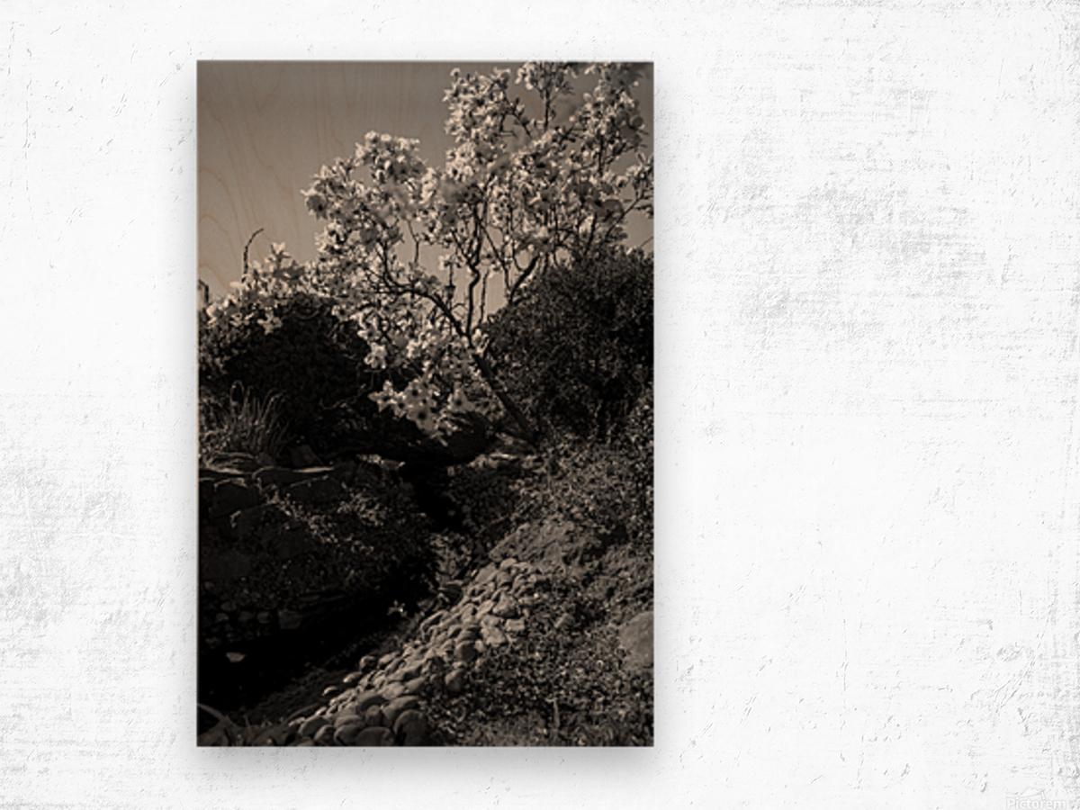 20190316 DSC_0136 2 Wood print