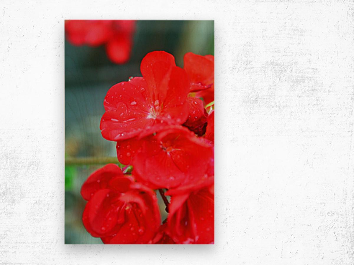 Elegantly Red Wood print