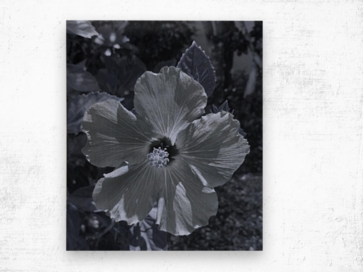 Screenshot_20190106 182135_Gallery Wood print