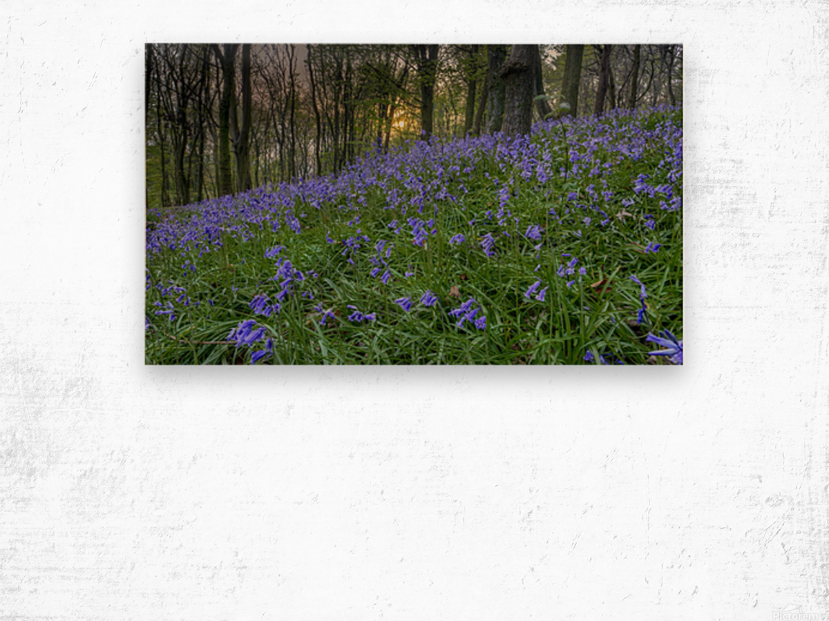 Sunset at Bluebell Wood in Margam Wood print