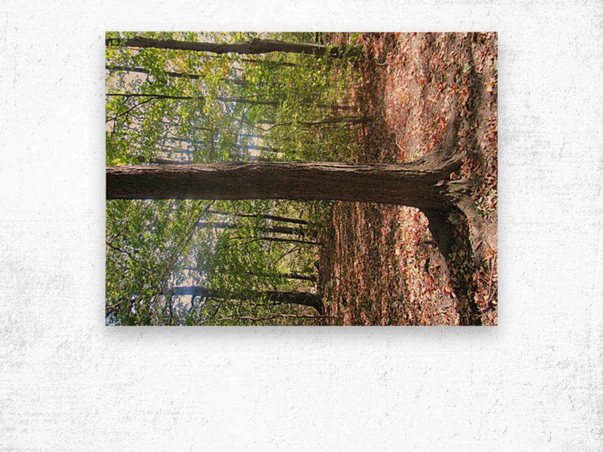 Landscape (60) Wood print