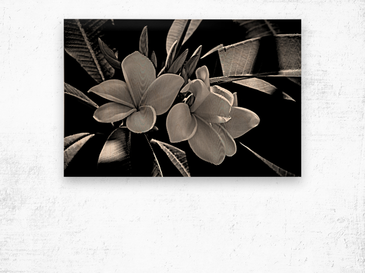 Plumeria In Black And White Wood print