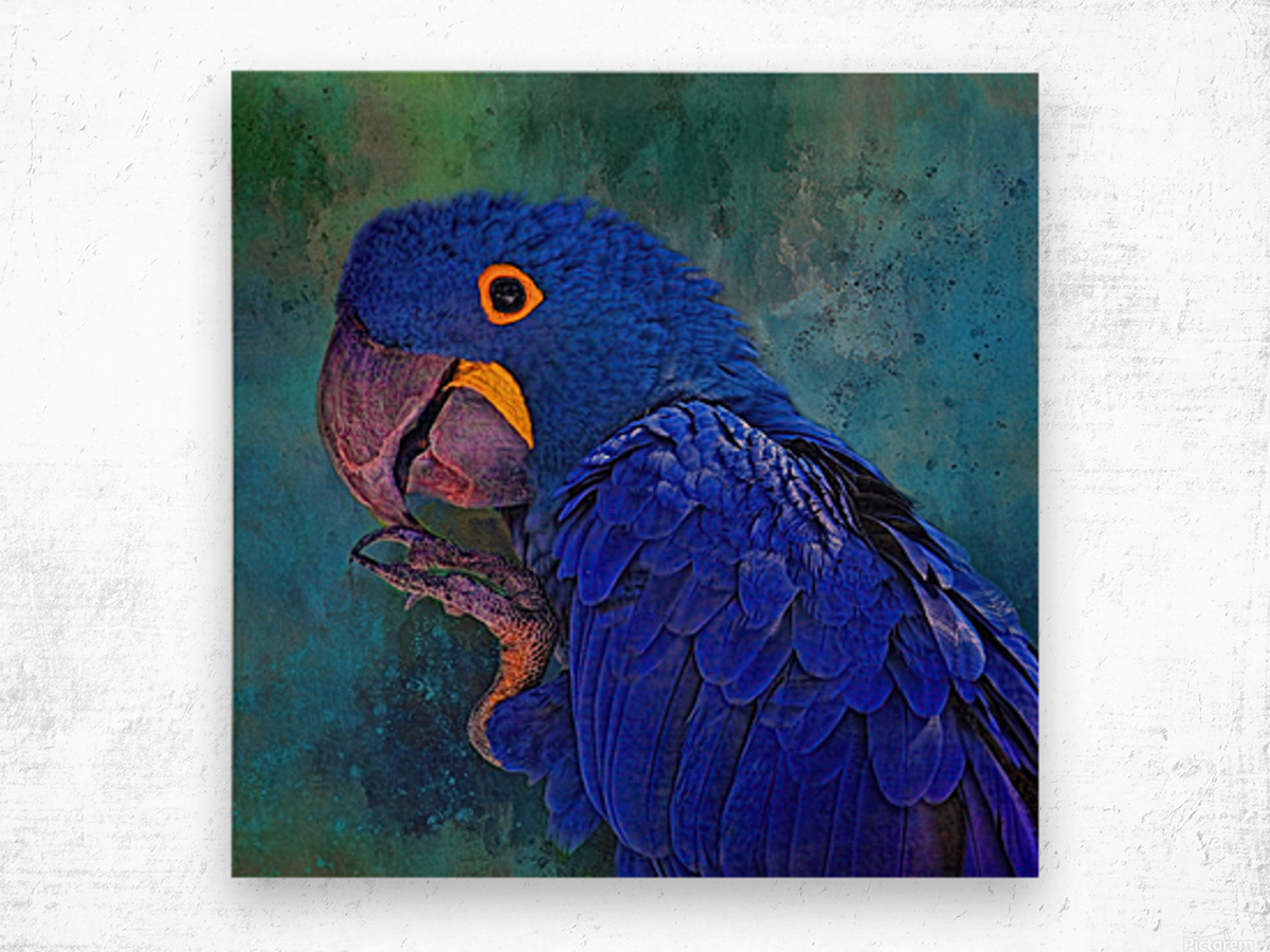 Hyacinth Macaw Wood print
