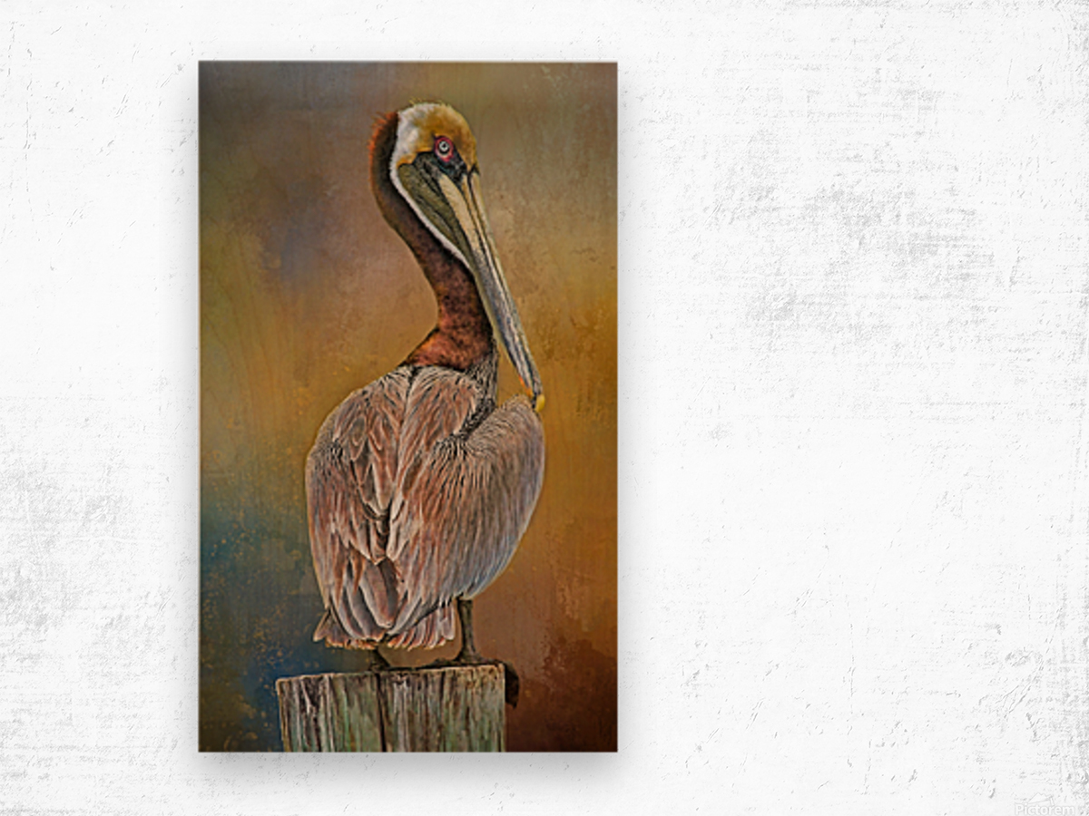 Brown Pelican In Breeding Plumage Wood print
