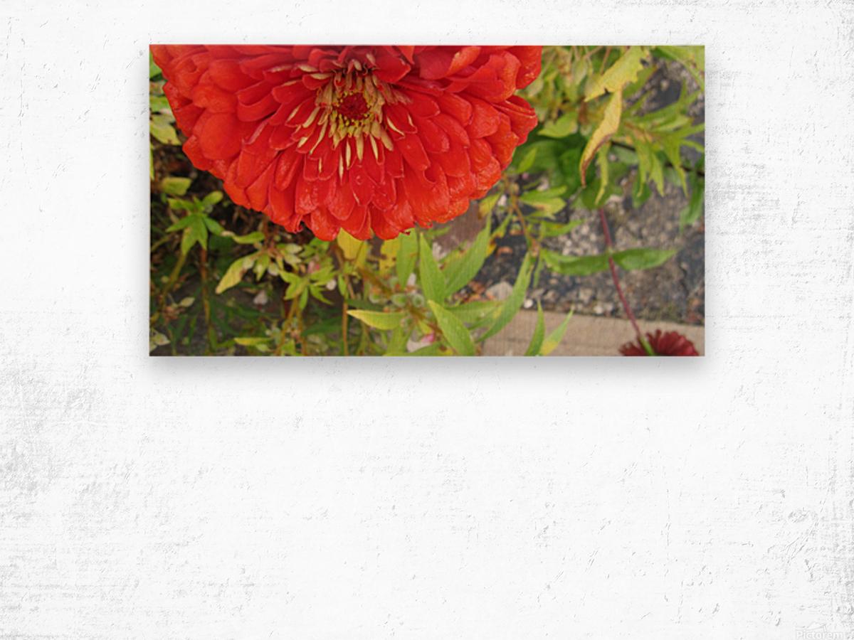 Flower (7) Wood print