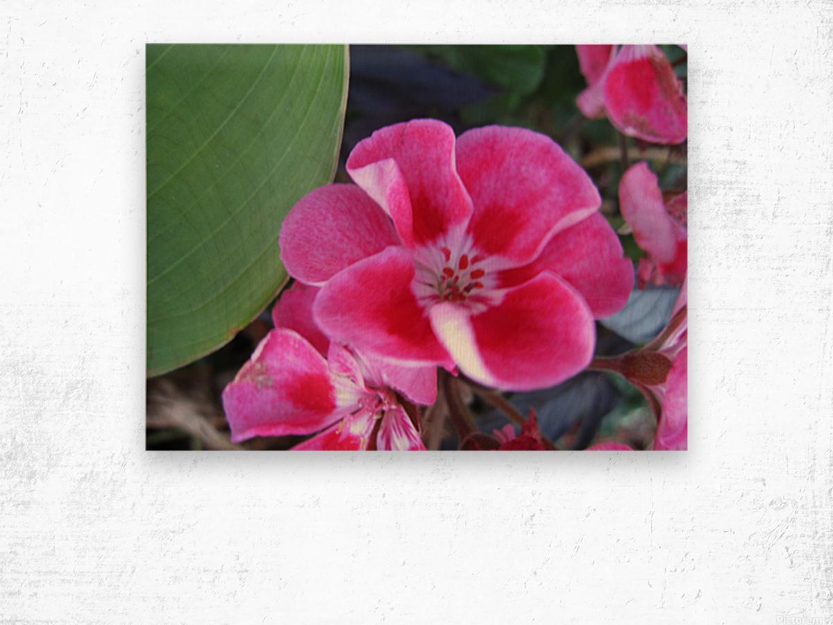 Flower (2) Wood print