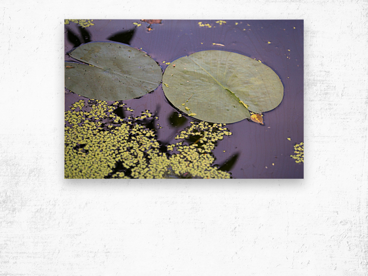 Lily Pads and Duckweed Dow Gardens 2018 Wood print