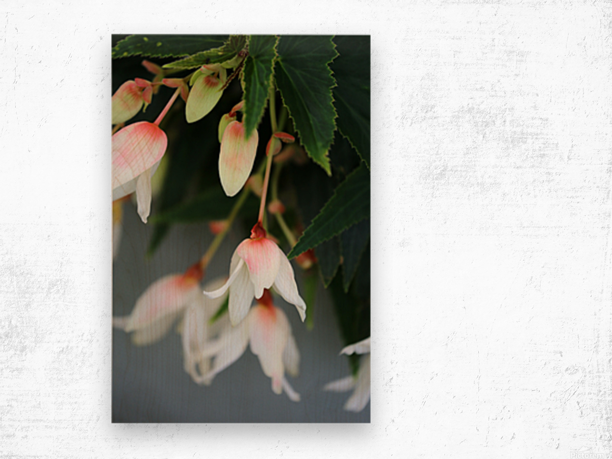 Soft Floral with Gray Wall 2 062618 Wood print