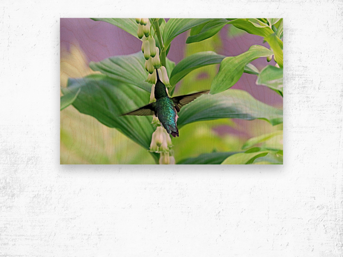 Hummer And Solomon Seal Wood print