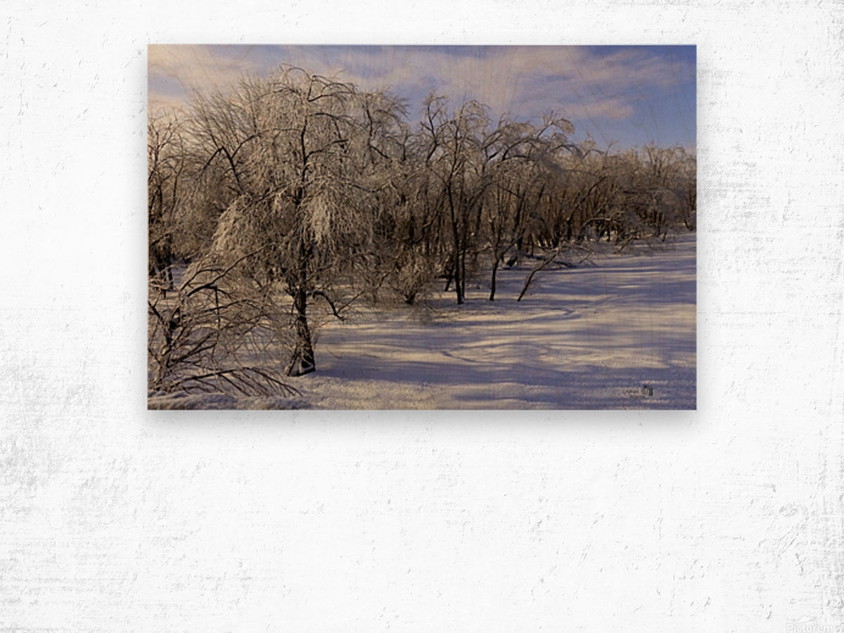 Matin glace- Iced morning Wood print
