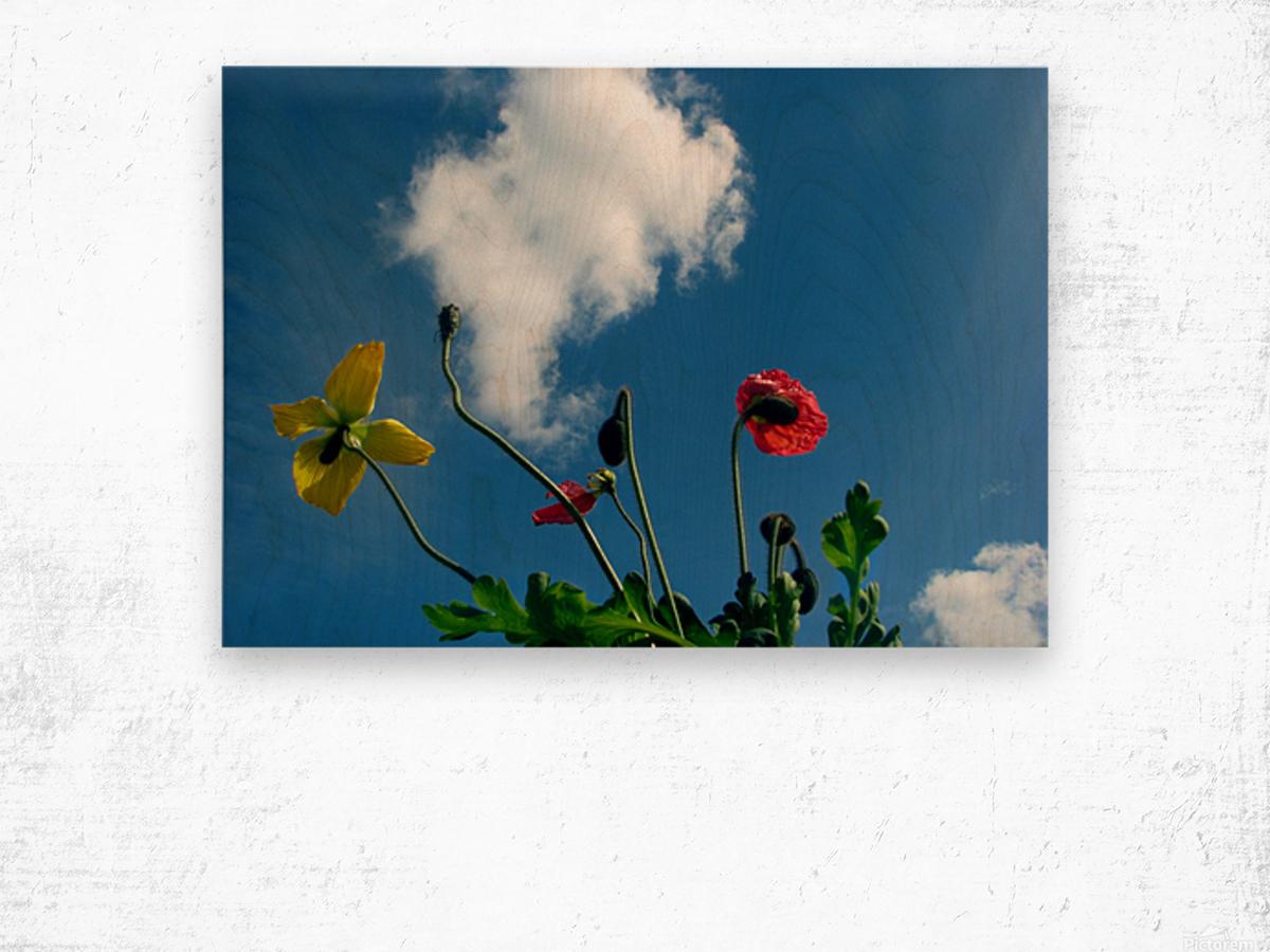 Happy Spring Flowers Wood print