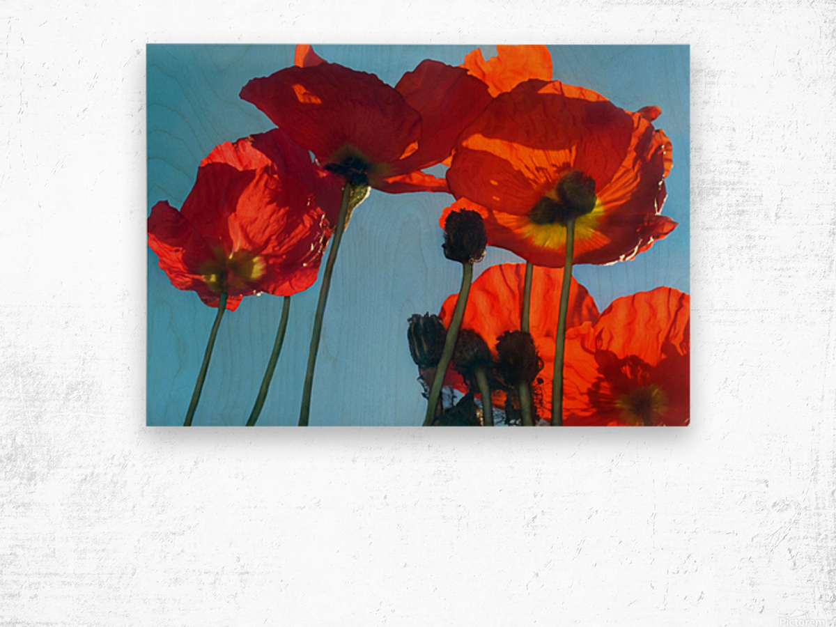 Poppies in the Sky Wood print