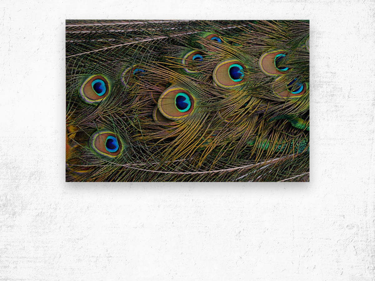 peacock tail feathers close up Wood print