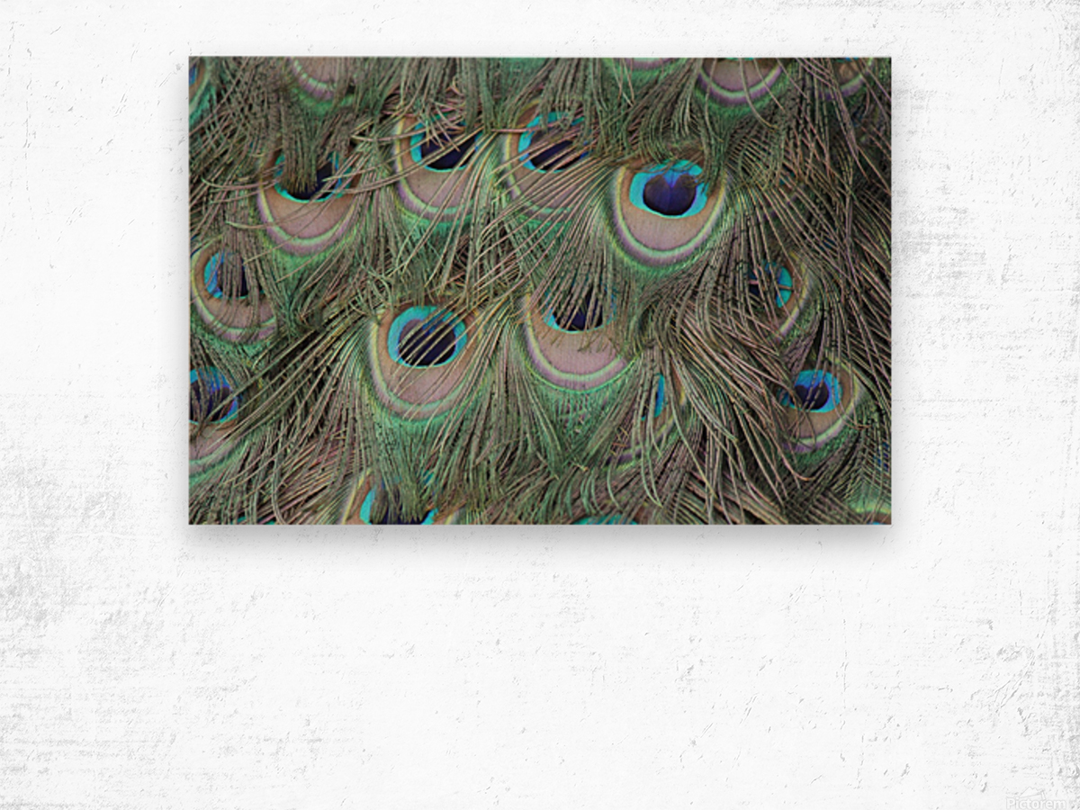 peacock feather pattern plumage Wood print