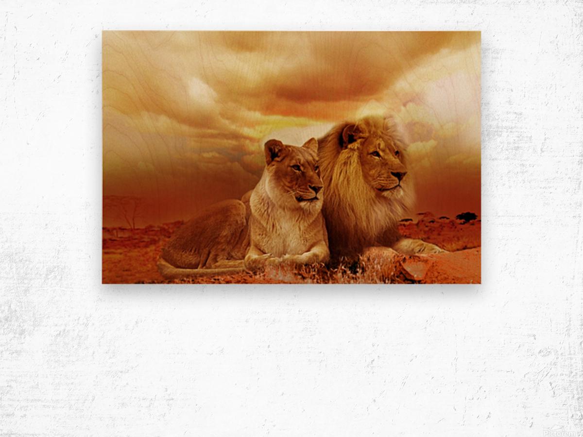 lion safari africa landscape Wood print