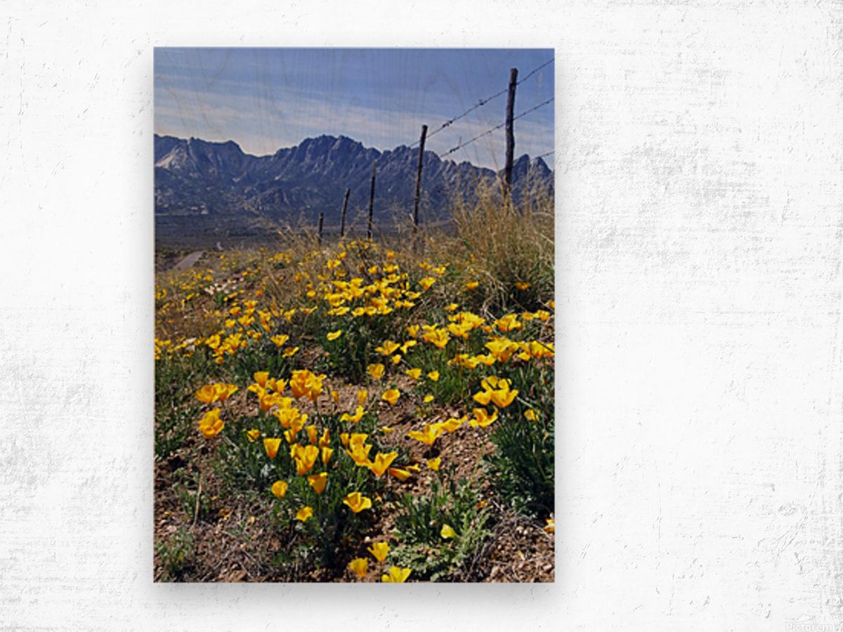 April at Aquirre Springs Wood print