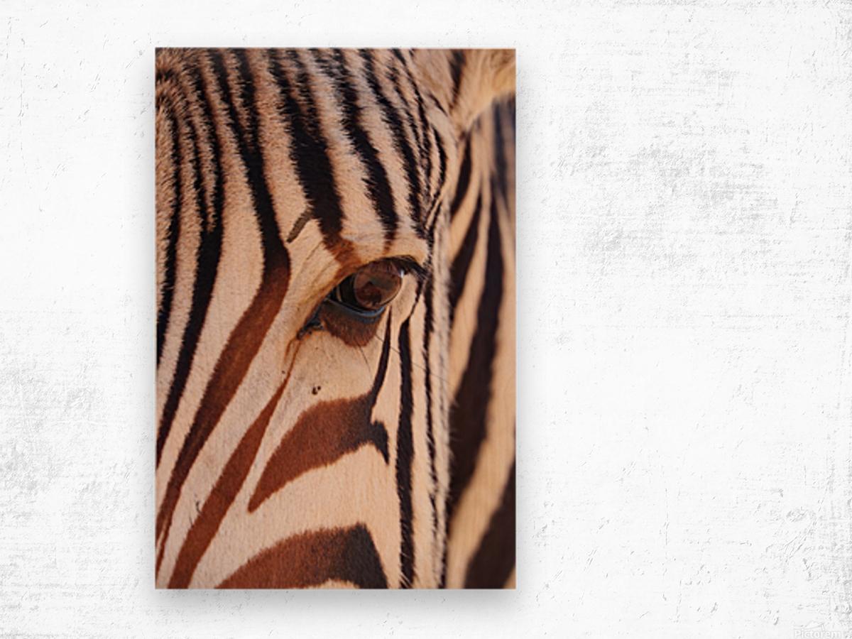 Zebra Eye 1873 Wood print
