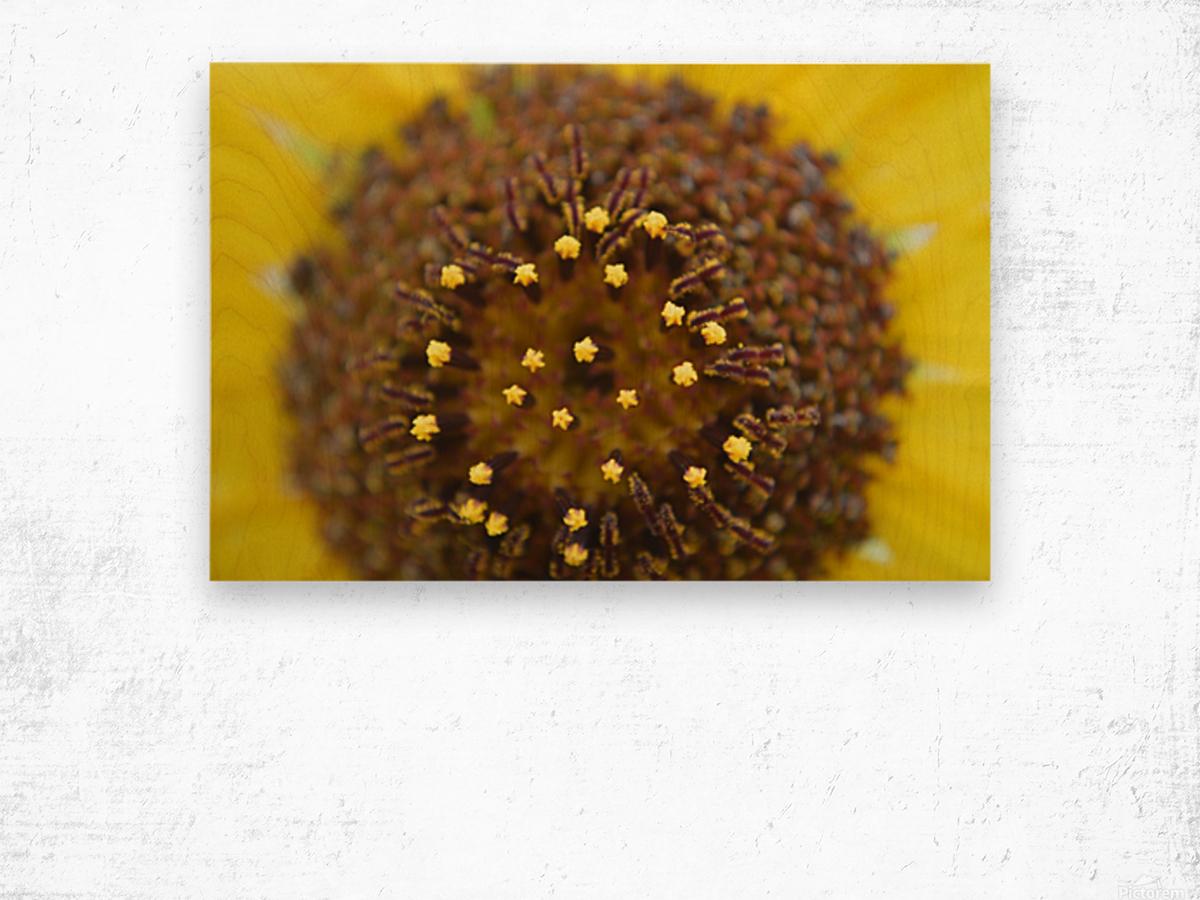 Sunflower Stars Wood print