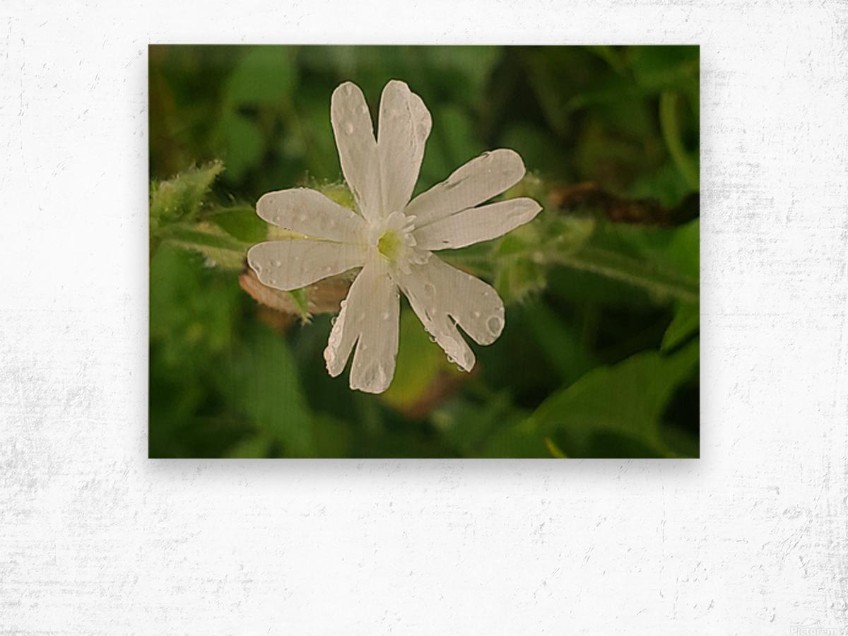Flower shower Wood print