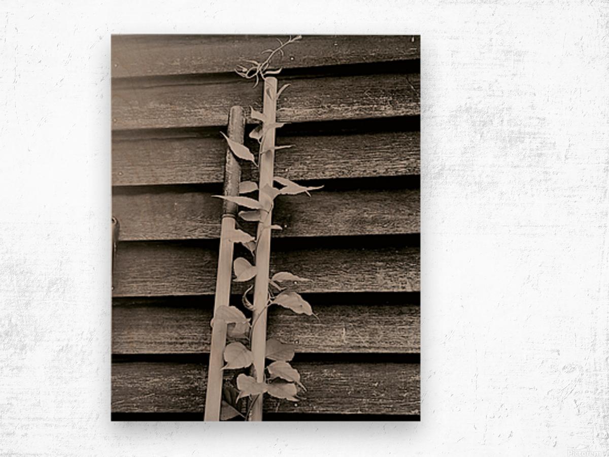 Garden tool vines Wood print