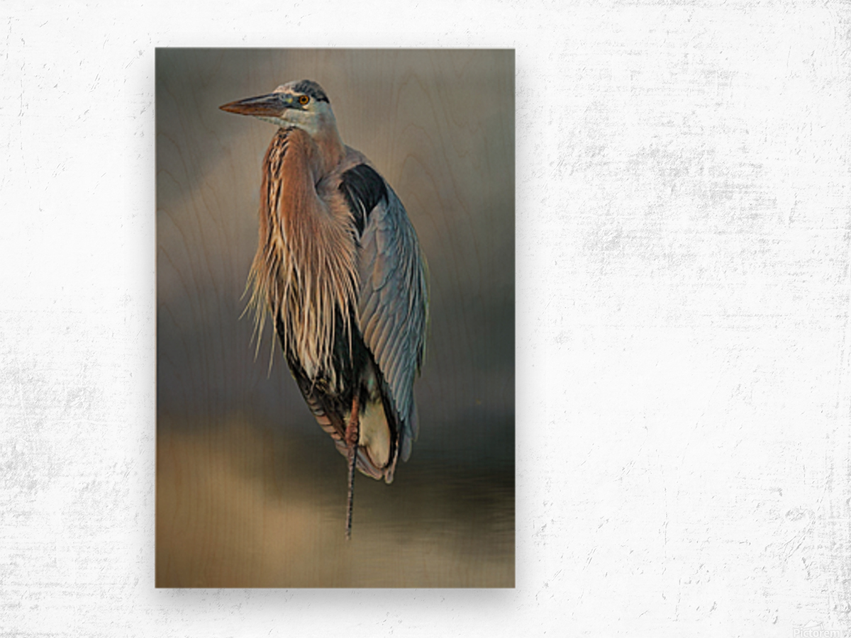 Great Blue Heron At Rest Wood print