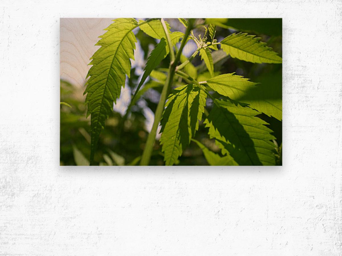 leaf with light Wood print