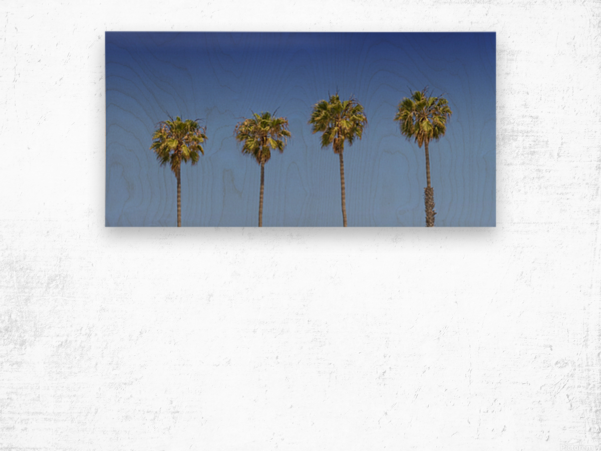 Lovely Palm Trees   Panorama Wood print