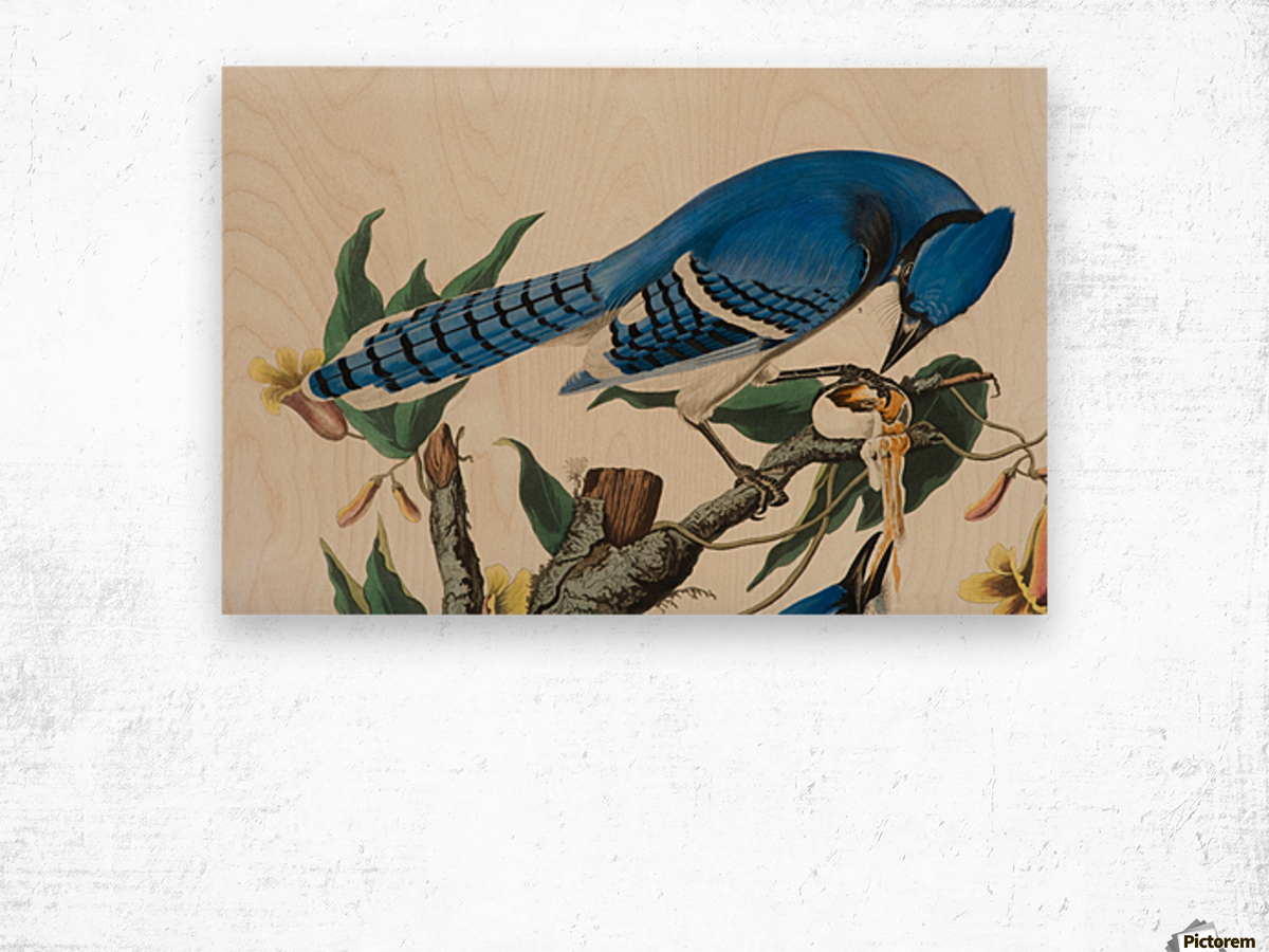 Blue Jay familly Wood print
