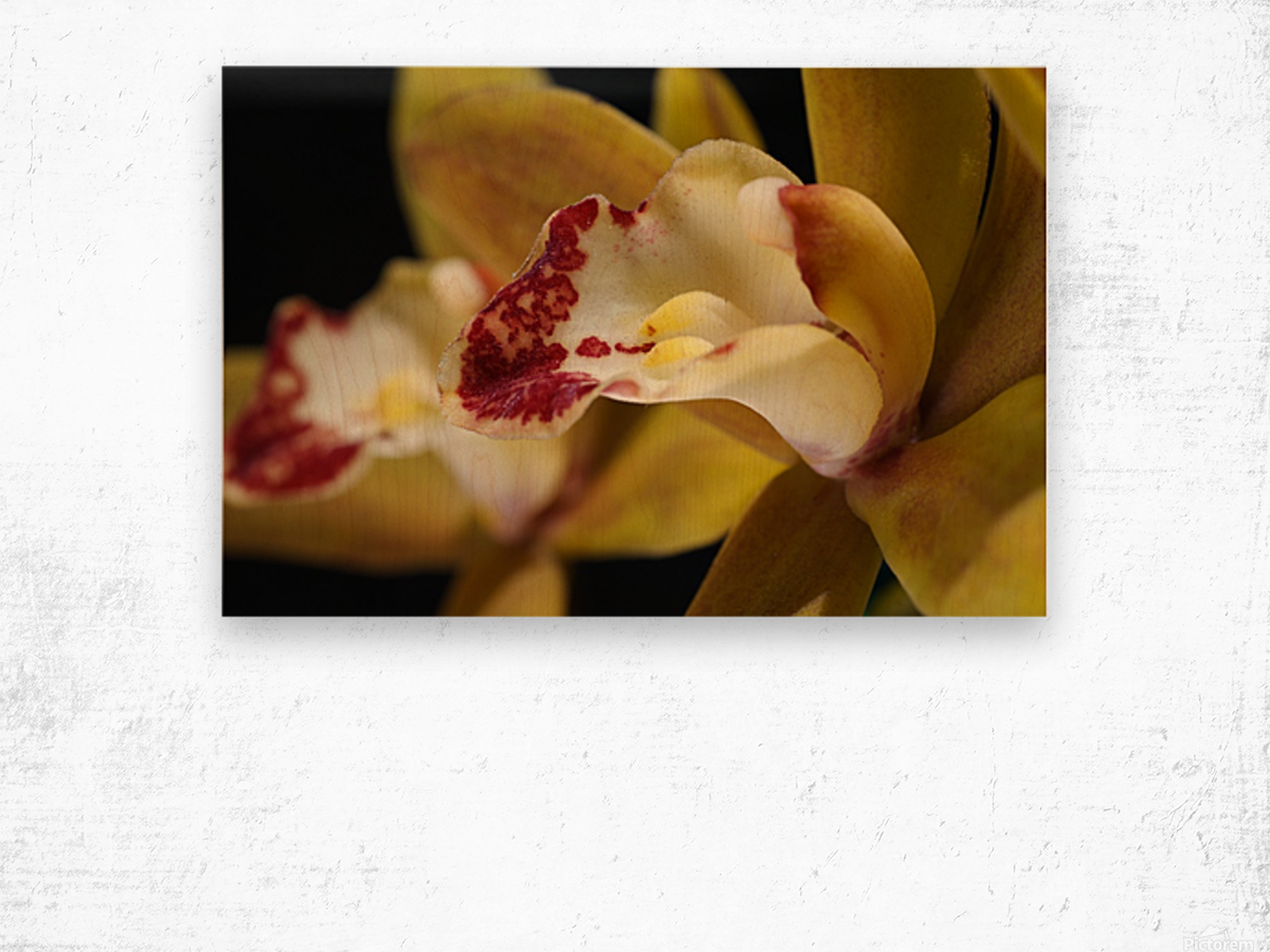 Green and Red Orchid Wood print