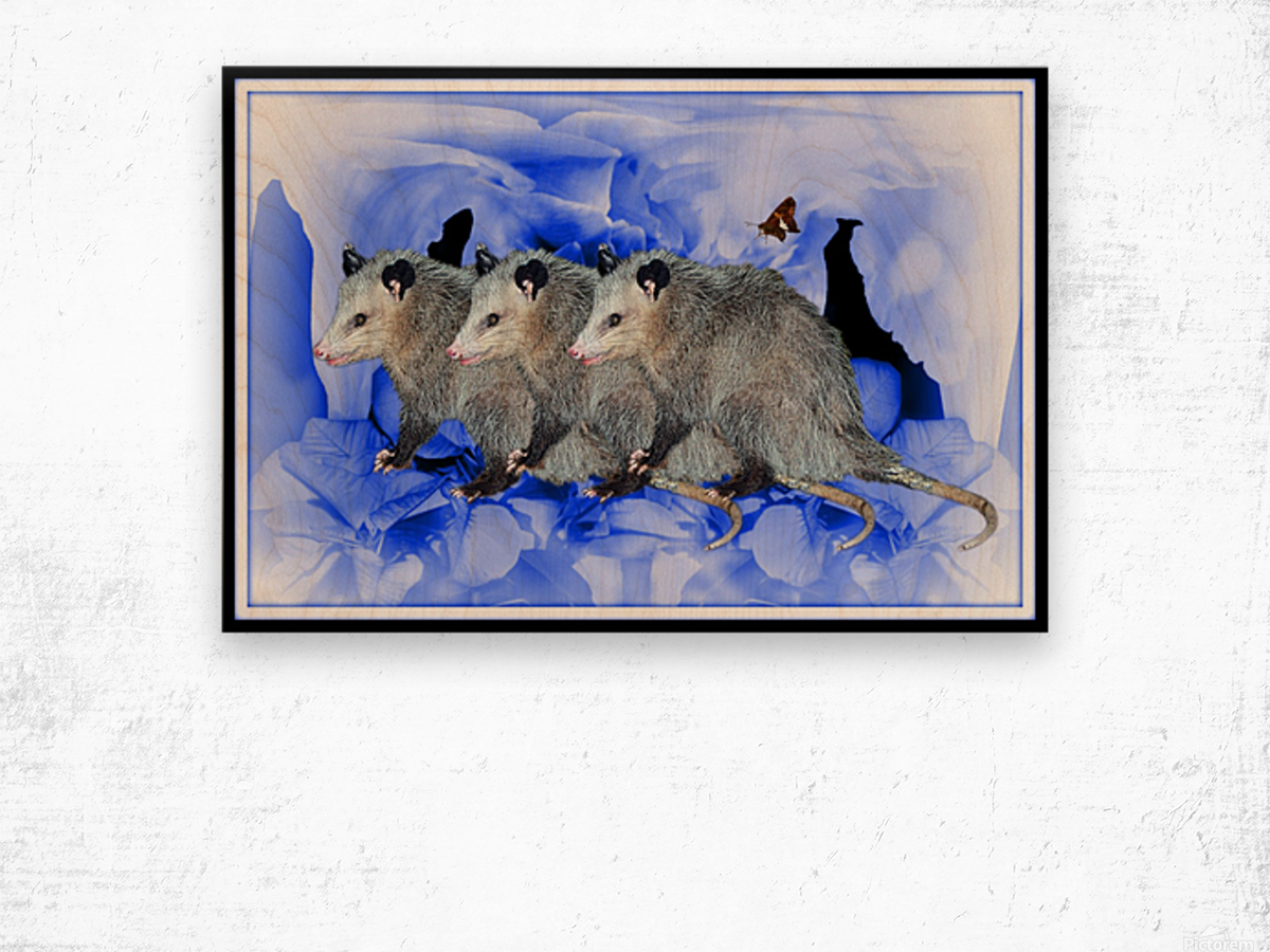 Party Of Possums Wood print