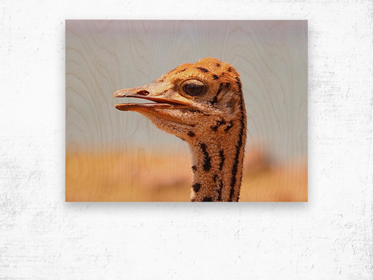Baby Ostrich 5378 Wood print