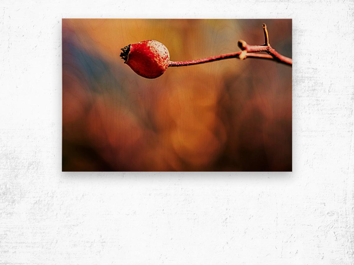 Red bud Wood print