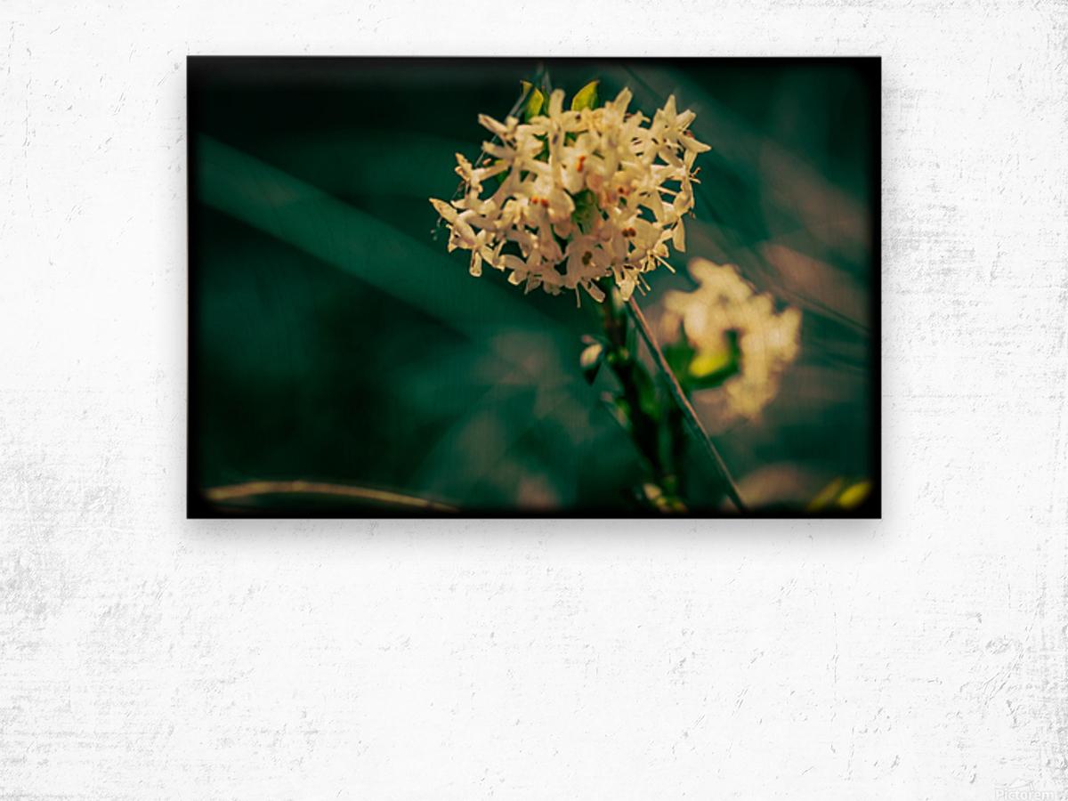 Rice Flower Wood print