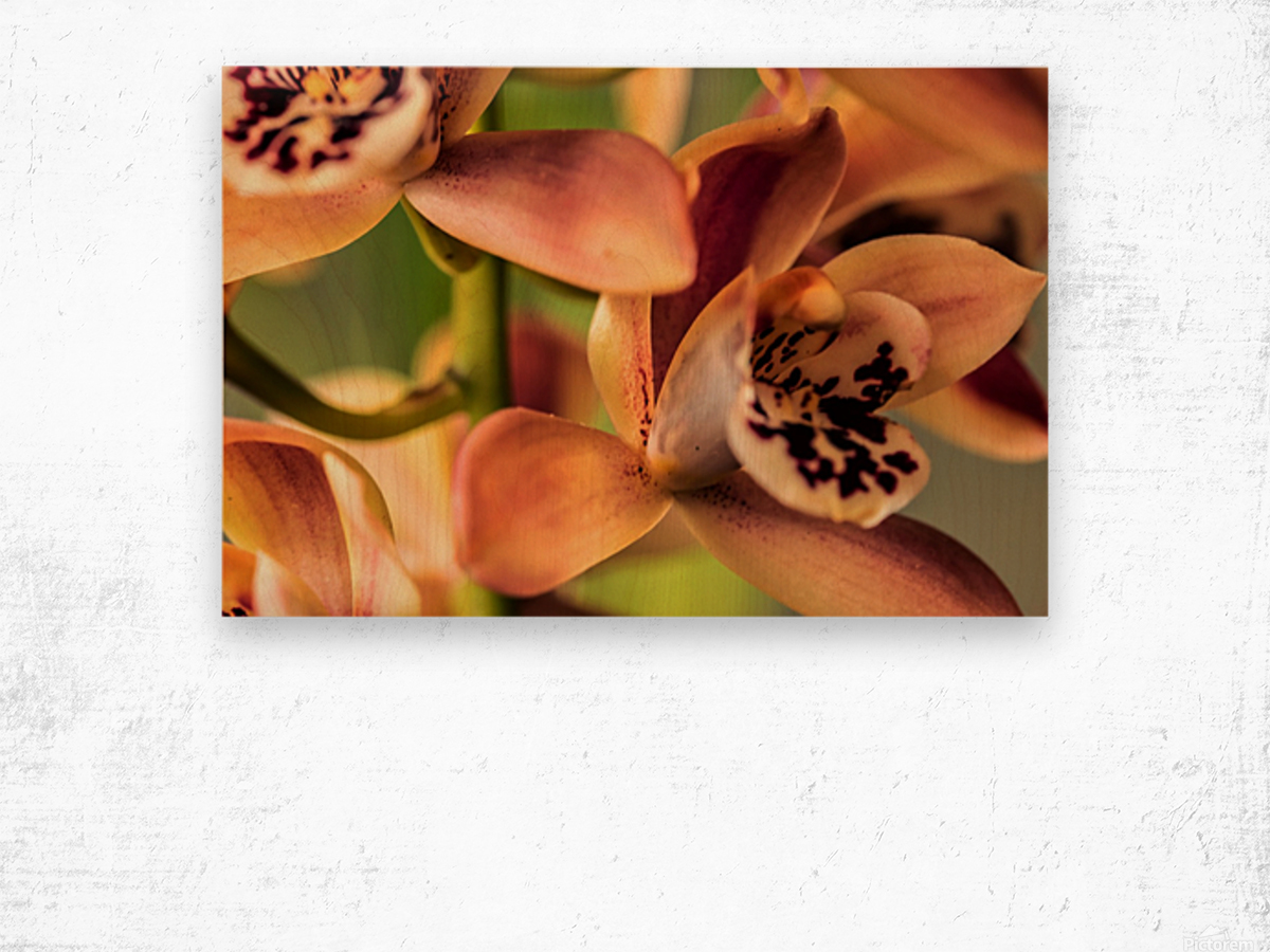 Blush Orchids Wood print
