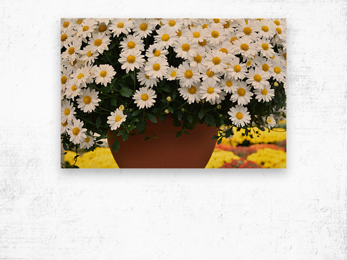 White Flowers In Hanging Pot White Flowers Canvas Print White Flowers Photograph 889 Wood print