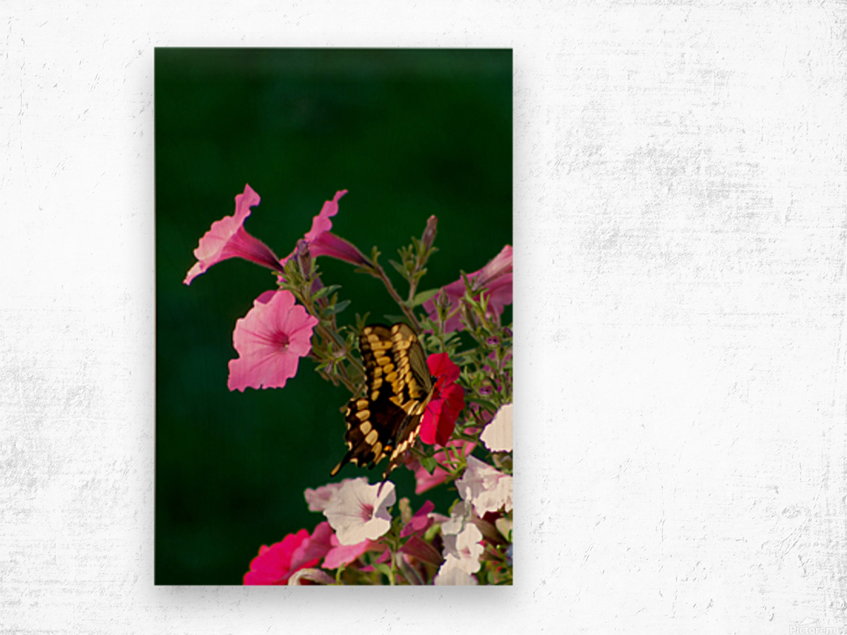 Butterfly on petunias Wood print