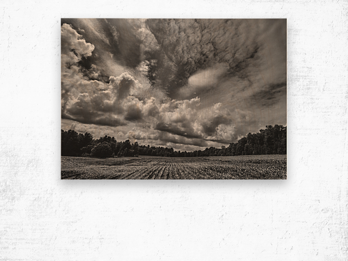 Corn Field Wood print
