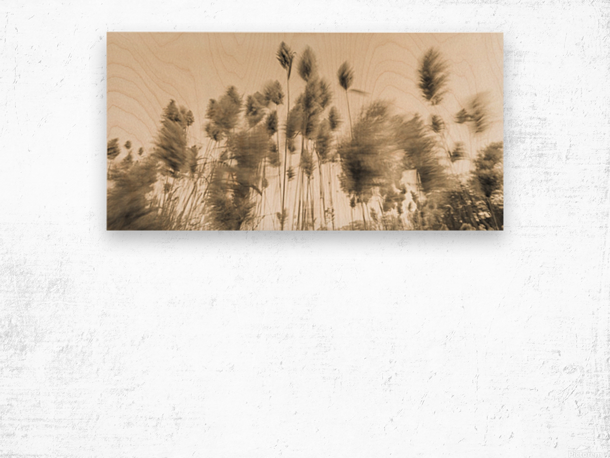 Standing up to the Wind 2 Wood print
