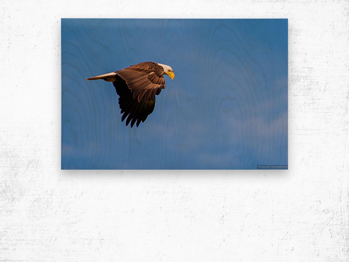 DSC_2352 Wood print