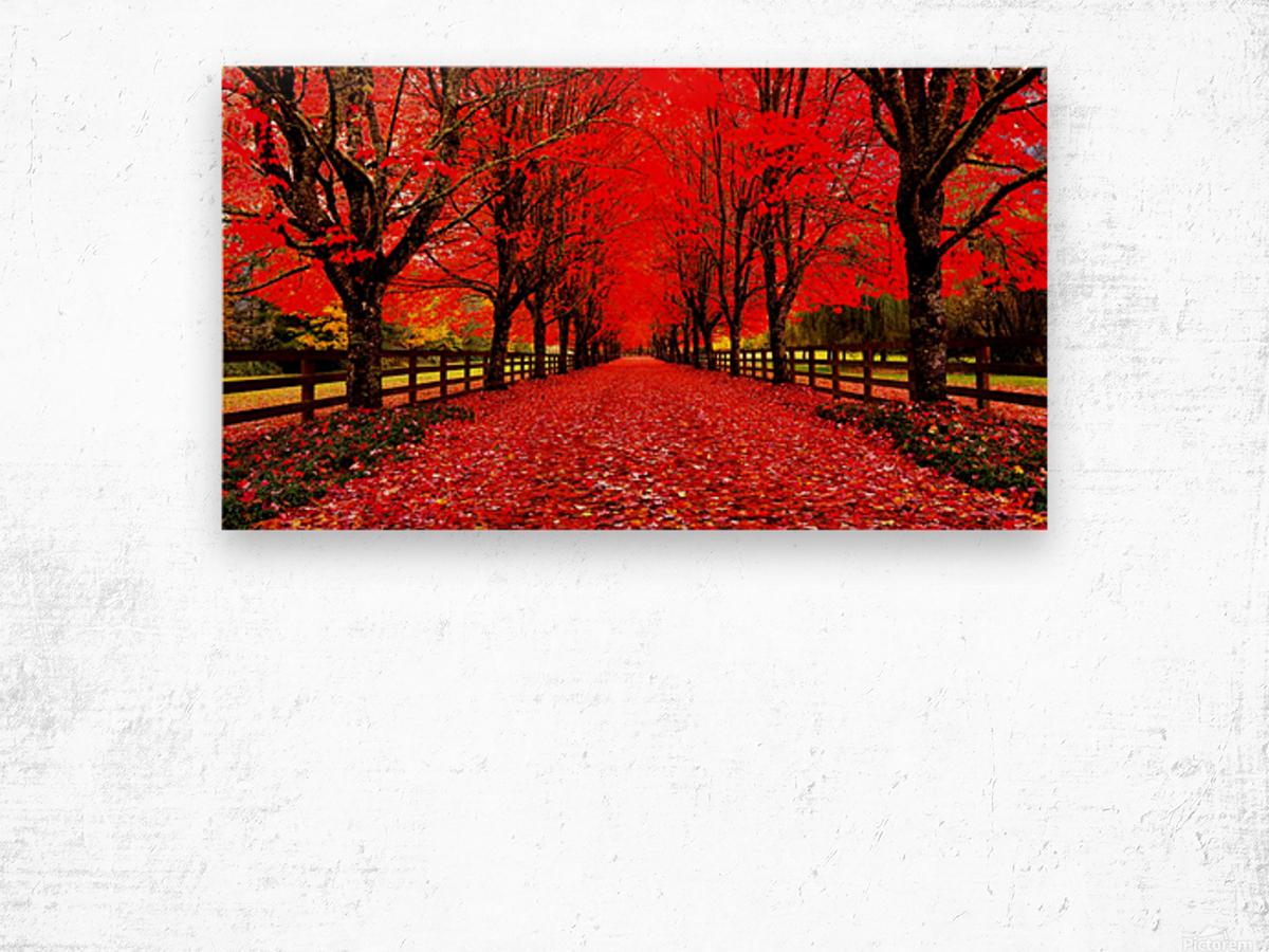 Red Carpet Wood print