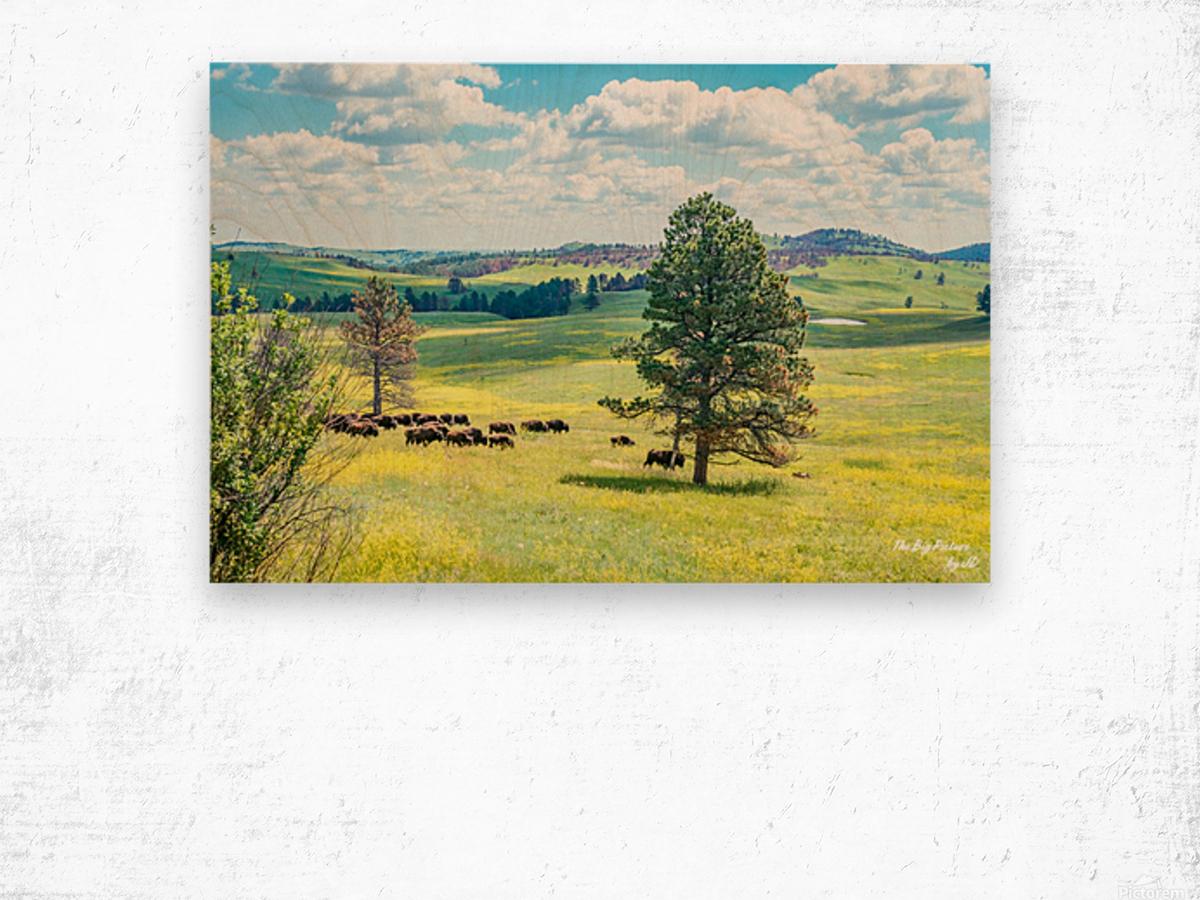 Custer State Park Bison Wood print