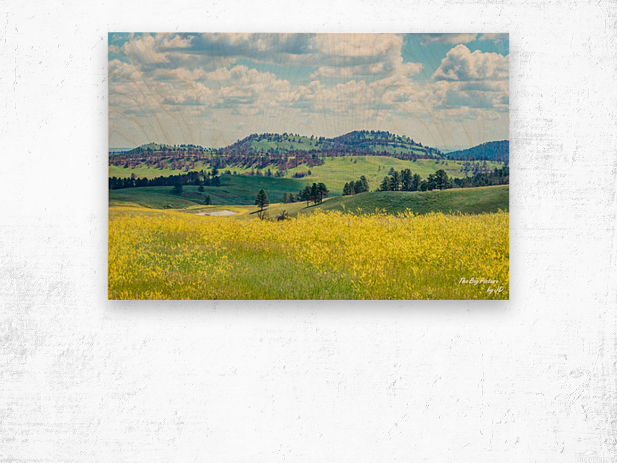 Custer State Park Yellow Wood print